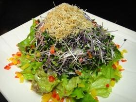 新芽とカリカリジャコのシーザーサラダ